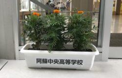 阿蘇中央高校 生徒さんの花卉展示について(8月)