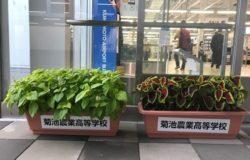 南稜高校 生徒さんの花卉展示について(10月)