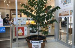 北稜高校 生徒さんの花卉展示について(12月)