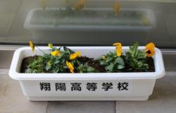 翔陽高校 生徒さんの花卉展示について(1月)