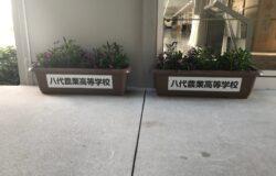 芦北高校 生徒さんの花卉展示について(3月)