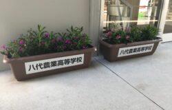 八代農業高校 生徒さんの花卉展示について(2月)