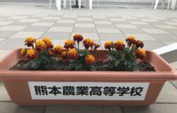 熊本農業高校 生徒さんの花卉展示について(4月)
