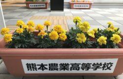 熊本農業高校 生徒さんの花卉展示について(5月)