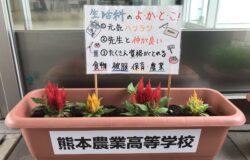 熊本農業高校 生徒さんの花卉展示について(6月)