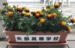 矢部高校 生徒さんの花卉展示について(7月)