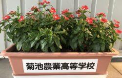 菊池農業高校 生徒さんの花卉展示について(9月)